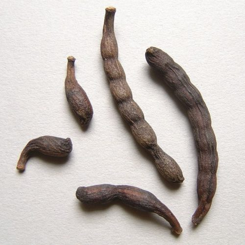 Seeds of selim, long black pepper, guinea pepper, african pepper